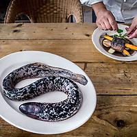 Nederland, Amsterdam, 15 september 2016.<br /> Chef-kok Henri Roquas bereidt  de zo genaamde zeeprik.<br /> In een notendop: de zeeprik is een zeldzaam dier, waarvan de meeste Nederlanders amper weten dat hij in onze rivieren rondzwemt. Chef-kok Henri Roquas wil meer aandacht vestigen op dit &lsquo;levende fossiel&rsquo;, en richtte daarvoor het &lsquo;Zeeprikgenootschap&rsquo; op. Die promoot de zeeprik.<br /> Roquas is chef, en bereidt regelmatig een zeeprik of ander &lsquo;fossiel&rsquo; om die in Nederland op de kaart te zetten.<br /> <br /> Netherlands, Amsterdam, September 15, 2016.<br /> <br /> Chef Henri Roquas prepares sea lamprey. In a nutshell: the sea lamprey is a rare animal and most Dutch people hardly know it swims around in our rivers. Henri Roquas wants to draw more attention to this &quot;living fossil&quot;, and set up the 'sea lamprey society' to promote this unique fish.<br /> <br /> Foto: Jean-Pierre Jans