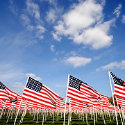 American flags on the National Mall