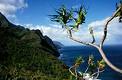 Hawaii: Kauai, along the Kalalau Trail.  Photo hifree101.Photo copyright Lee Foster, 510/549-2202, lee@fostertravel.com, www.fostertravel.com
