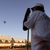 LAS VEGAS, NEVADA, November 12, 2007: Contestants from around the world gathered in Las Vegas, Nevada on November 12, 2007 to race their pigeons in the Las Vegas Classic. The pigeons descend on the finish line and enter the lofts with a little coaxing from the bird wrangler.