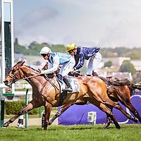 Alakhana (M. Guyon) wins Prix de la Flandrie 16/05/2016 Deauville, France