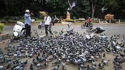Feeding pigeons, Cubbon Park, Bangalore