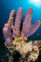 Purple Tube Sponge and Sun Rays<br /> <br /> Shot in Cayman Islands