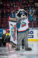 KELOWNA, CANADA - FEBRUARY 8:  Rocky Raccoon, the mascot of the Kelowna Rockets stands on the ice against the Prince George Cougars on February 8, 2019 at Prospera Place in Kelowna, British Columbia, Canada.  (Photo by Marissa Baecker/Shoot the Breeze)