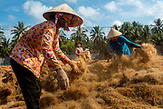 Vietnamese workers separate coconut husk fibres andleave the to dry in the sun. The ground husks will be used for a variety of purposes such as a low cost plant mulch and soundproofing material.