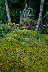 The Meadow Above Horton's Hook, Shaw Island, Washington, US
