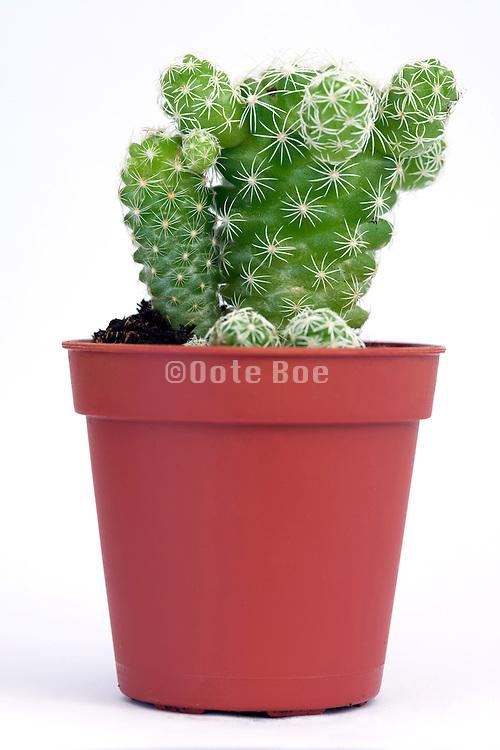 cactus plant against a white backdrop