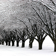 A  winter storm left a blanket of snow over the Iowa countryside in February of 2007.    A row of trees east of Des Moines take on an intricate pattern.