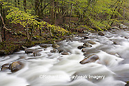 66745-038.15 Middle Prong of the Little River in spring, Tremont Area, Great Smoky Mountain National Park, TN