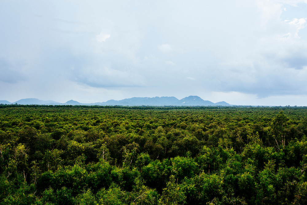 A view over the dense jungle of Tra Su Sanctuary in Chau Doc, in the Mekong Delta of southern Vietnam.