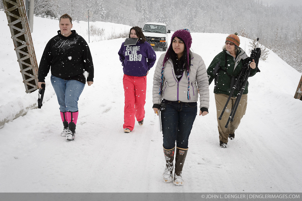 Students (left to right) Maggie Martin, Allison Stuart, Heidi Kattenhorn, and Pam Randles, Takshanuk Watershed Council Education Director, walk to their bald eagle (Haliaeetus leucocephalus) spotting location on the Klehini River Bridge, near the Porcupine Crossing turnoff to count bald eagles. Since 2009, students have been conducting a weekly count of bald eagles during the fall semester for the citizen science class at the Haines School. The project is part of a field-based for-credit class, sponsored by the Takshanuk Watershed Council, in which students participate in research studies and learn about field data collection. Under the guidance of Pam Randles, Takshanuk Watershed Council Education Director, students count bald eagles in the Chilkat River Valley using spotting scopes at 10 locations and present their data at the Bald Eagle Festival held in November in Haines. During late fall, bald eagles congregate along the Chilkat River to feed on salmon. This gathering of bald eagles in the Alaska Chilkat Bald Eagle Preserve is believed to be one of the largest gatherings of bald eagles in the world.