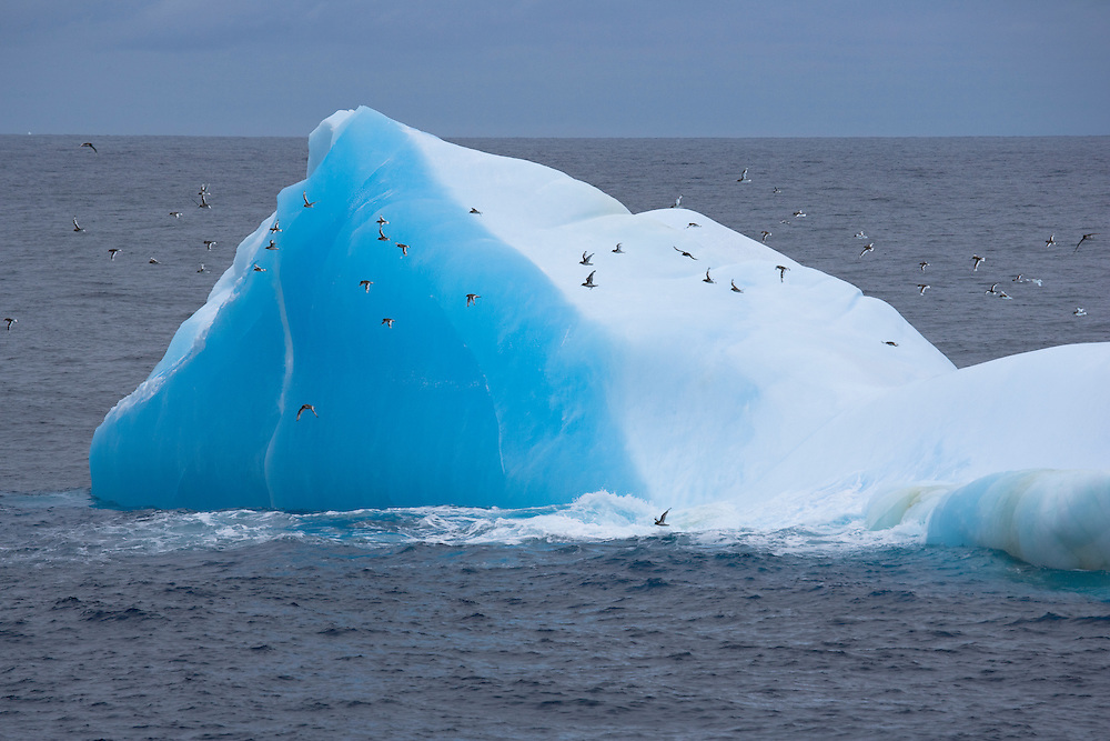 February 12th 2007. Southern Ocean. Birds fly past an iceberg reflecting the color of the Ross Sea.