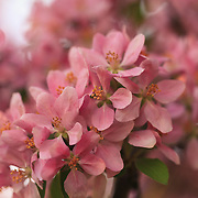 &quot;Fluttering in Pink&quot;<br />