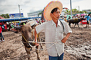 Oct. 3, 2009 - CHONBURI, THAILAND: A farmer waits with his water buffalo at the finish line holding area during the first day of races at the Chonburi Buffalo Races Festival, Saturday, Oct. 3. Contestants race water buffalo about 200 meters down a muddy straight away. The buffalo races in Chonburi first took place in 1912 for Thai King Rama VI. Now the races have evolved into a festival that marks the end of Buddhist Lent and is held on the first full moon of the 11th lunar month (either October or November). Thousands of people come to Chonburi, about 90 minutes from Bangkok, for the races and carnival midway. Photo by Jack Kurtz / ZUMA Press