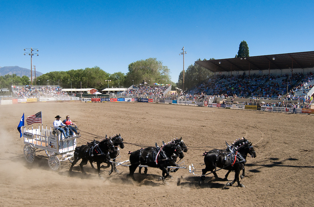 Images from the 41st annual Bishop Mule Days celebration in Bishop, Calif. ..Photos by David Calvert/Gostin Productions for Mule Days
