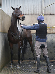 Apples Jade is washed down by Keith Donoghue during the stable visit to Gordon Elliott's yard at Cullentra House, County Meath.
