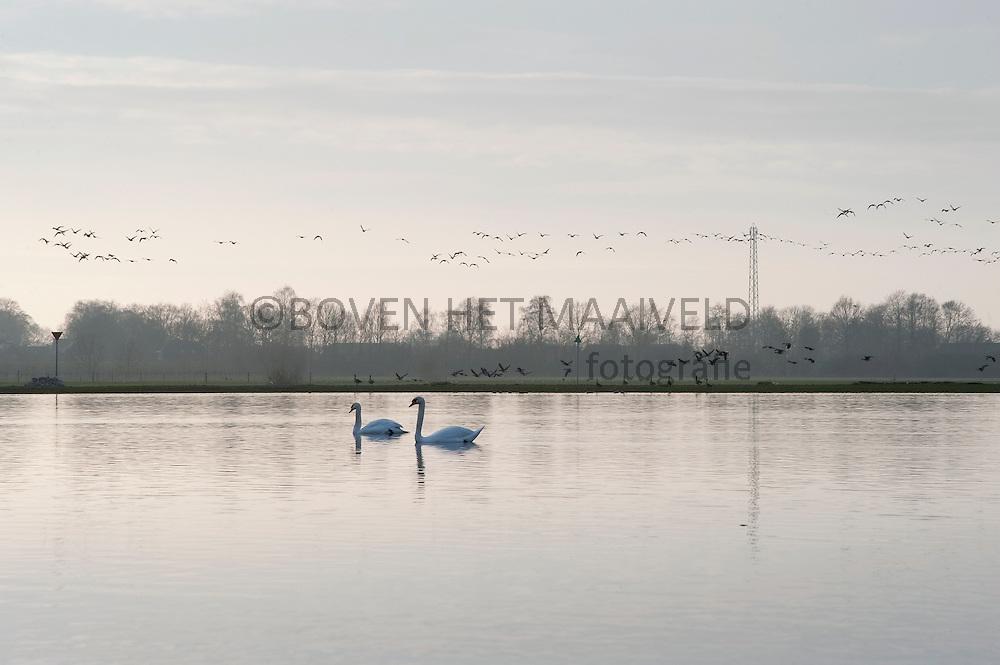 Uiterwaarden IJssel