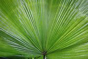 SONY DSC Costa Rica