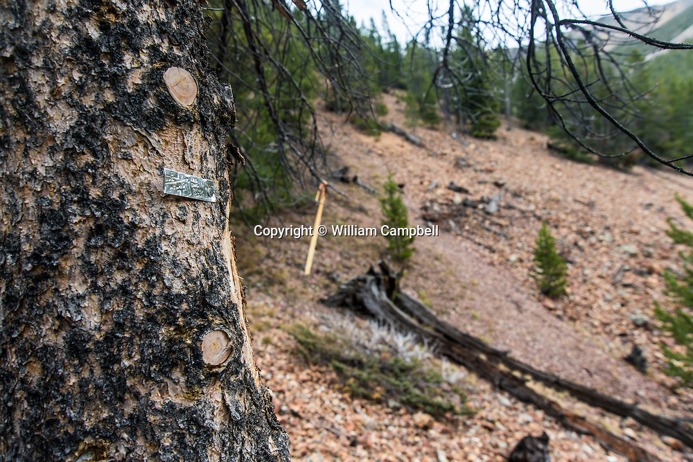 A Lucky Minerals mining claim marker and exploration drill pad stake/marker in Emigrant Gulch, Montana.