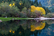 Bigleaf Maples (Acer macrophyllum) reflecting in the water of Silver Lake in Silver Lake Provincial Park near Hope, British Columbia, Canada
