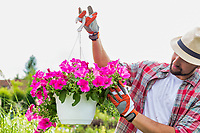 Portrait of mature gardener examining flowers on a pot in shop