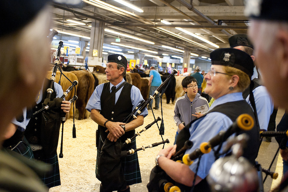 Members of the Denver & District Pipe Band wait to perform before an auction of Scottish Highland Cattle.