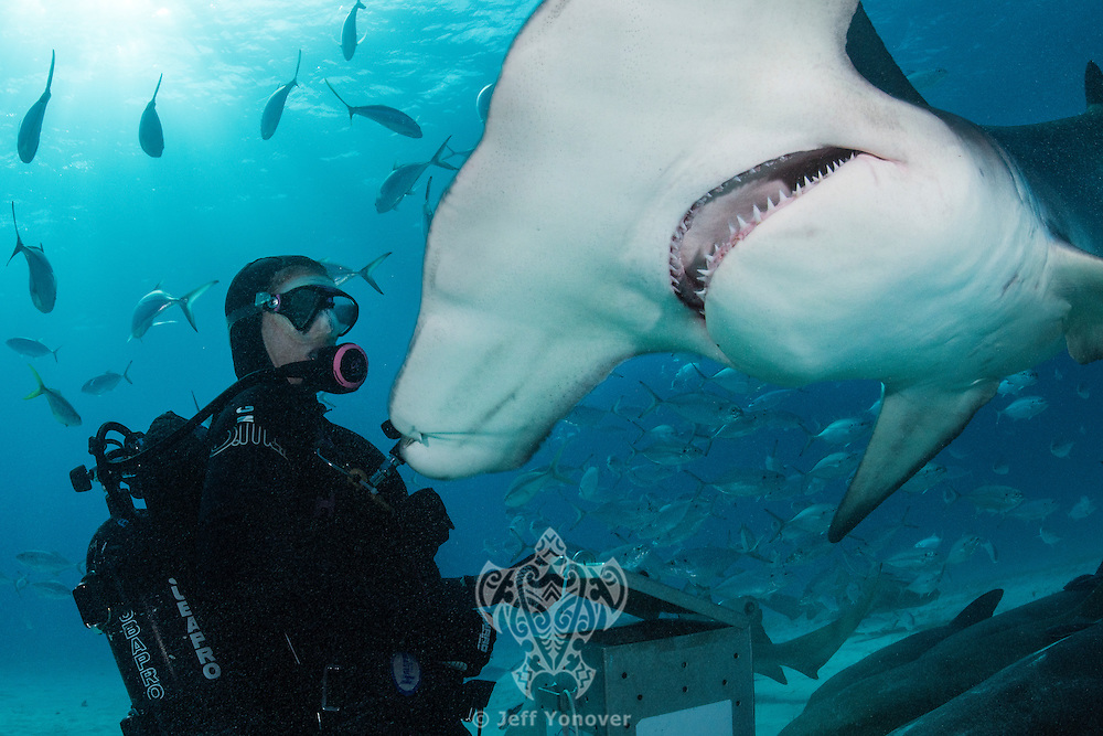 Jamin Martinelli face to face with a Great Hammerhead Shark<br /> <br /> Shot in Bimini, Bahamas