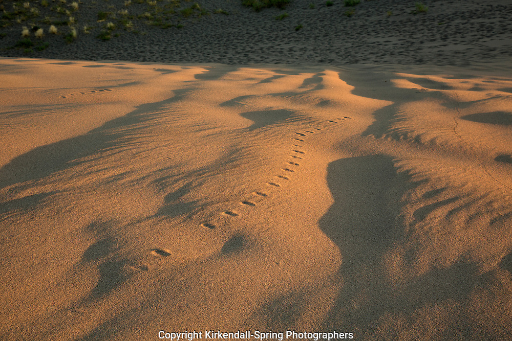 ID00657-00...IDAHO - Tracks on the sand at Bruneau Dunes State Park near Mountain Home.