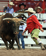 Bull Fighter squares up against a large bull, 27 July 2007, Cheyenne Frontier Days