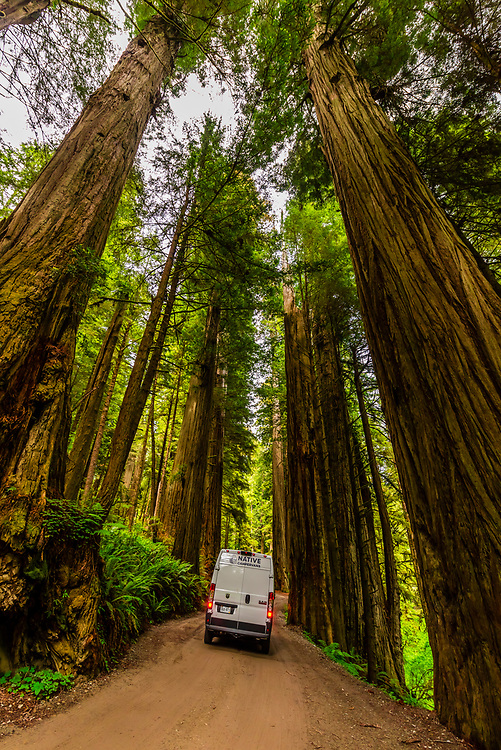On a road trip in a camper van, driving on Howland Hills Road in Jedediah Smith Redwoods State Park, part of Redwood National and State Parks, near Crescent City, northern California USA.