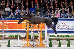 169, Max-Al<br /> KWPN hengstenkeuring - 's Hertogenbosch 2020<br /> © Hippo Foto - Dirk Caremans<br />  30/01/2020