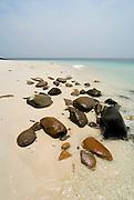 Wet stones at the beach in Viveros island. Las Perlas archipelago, Panama province, Panama, Central America.