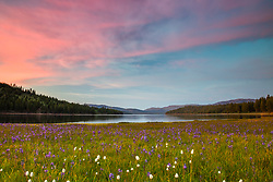 """Sagehen Meadows Sunset 3"" - Photograph of a vibrant sunset above Camas wildflowers and Stampede Reservoir at Sagehen Meadows."