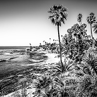 Orange County California black and white picture. High resolution photo was taken in Laguna Beach along the Pacific Ocean. Copyright © 2012 Paul Velgos with All Rights Reserved.