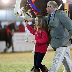 Mr Ron Calder's Bodafon Arthur<br /> f 2012<br /> Sire  Acle Gambler<br /> Dam  Bodafon Carys Ann<br /> Breeder  D & A J Williams