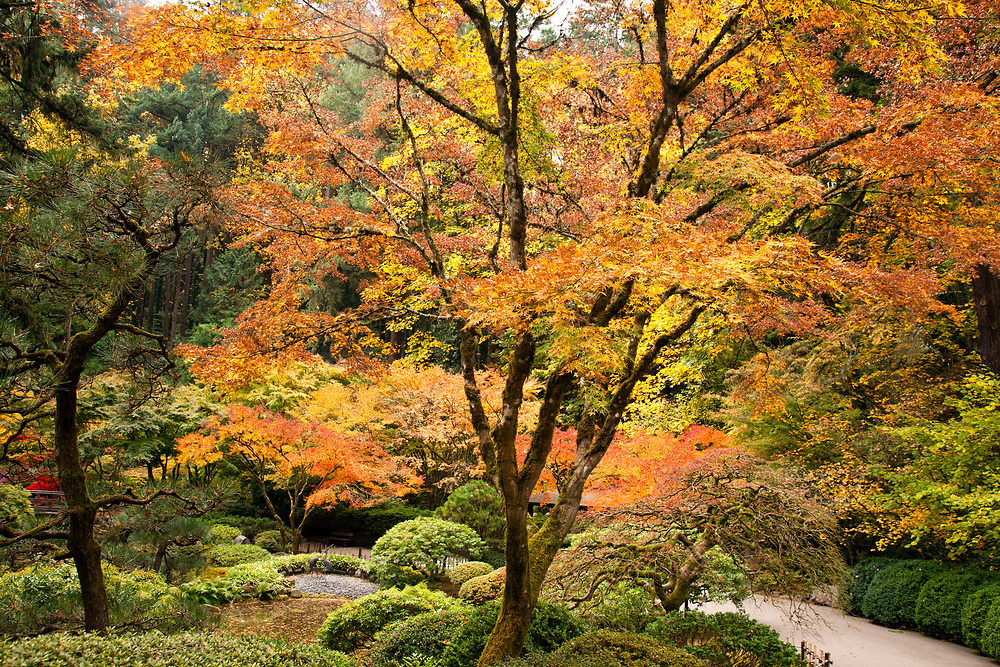 Autumn brings changing color to Portland's famous Japanese Tea Garden.