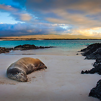 Sea Lion sleeping at the beach at the Galapagos Islands