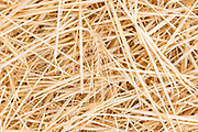Barley straw in a field in Segovia, Spain