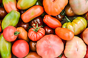 A crop of freshly picked tomato varieties