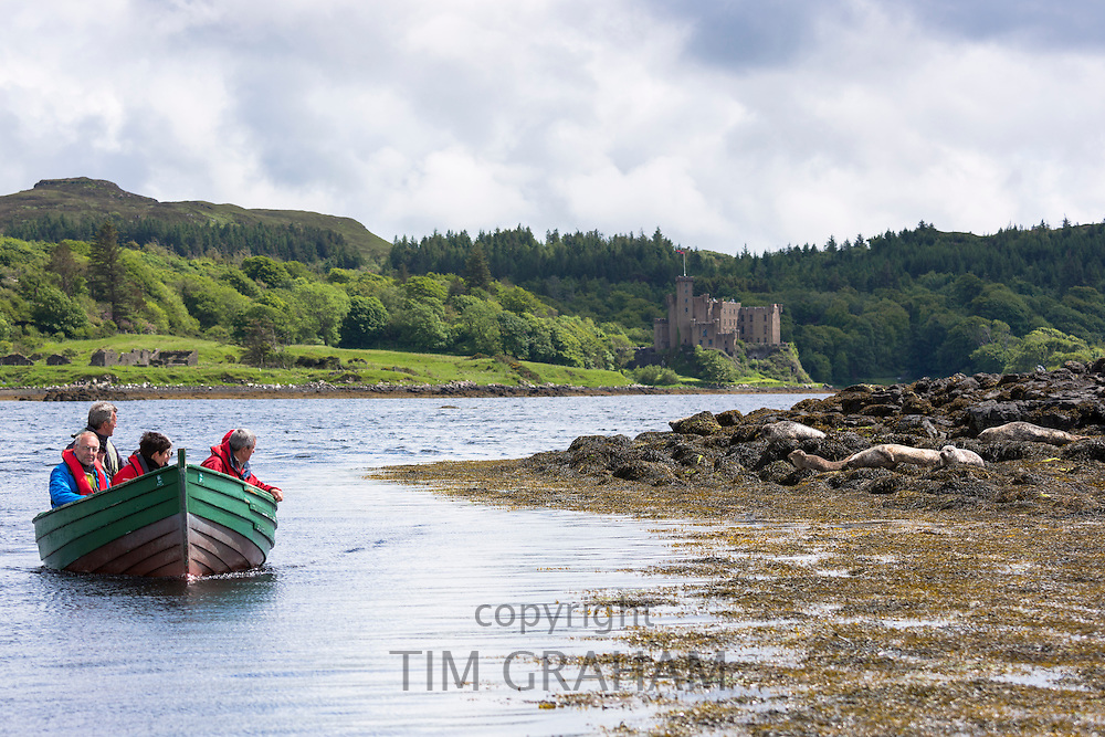 Tourists on sealwatching boat trip to view Common Seal or Harbour Seal, Phoca vitulina, basking on rocks and seaweed Dunvegan Castle and Loch, Isle of Skye, Western Scotland