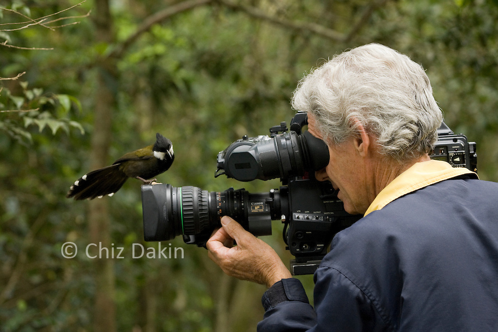 'The impossible wildlife shot'. Glen Threlfo attempts to film an Eastern Whipbird in Lamington National Park (QLD, Australia) but the bird seems more interested in looking at his camera than posing for it!