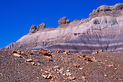 Morning light on colorful strata and petrified log sections on Blue Mesa, Petrified Forest National Park, Arizona USA