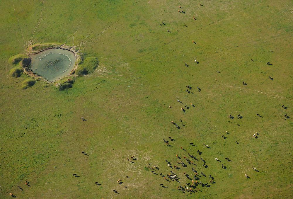 Aerial image<br /> Dehesa forest, Salamanca Region, Castilla y Le&oacute;n, Spain