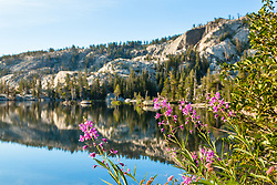 """""""Fireweed at Paradise Lake 1"""" - These Fireweed wildflowers were photographed at Paradise Lake, California."""