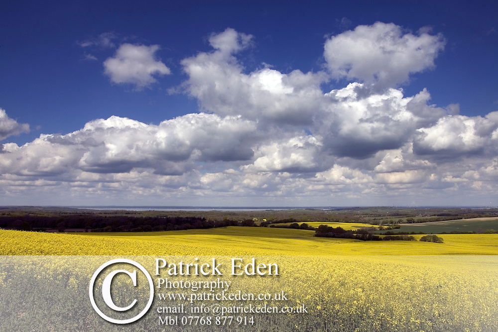 Oilseed rape Field Photographs of the Isle of Wight by photographer Patrick Eden photography photograph canvas canvases