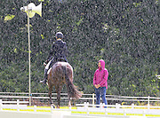 28/07/2013. FREE TO USE IMAGE. Camphire International Horse Trials & Festival 2013, Cappoquin Co. Waterford which take place from 26th - 28th July,. Pictured during the Dressage event during a sun shower. Picture: Patrick Browne
