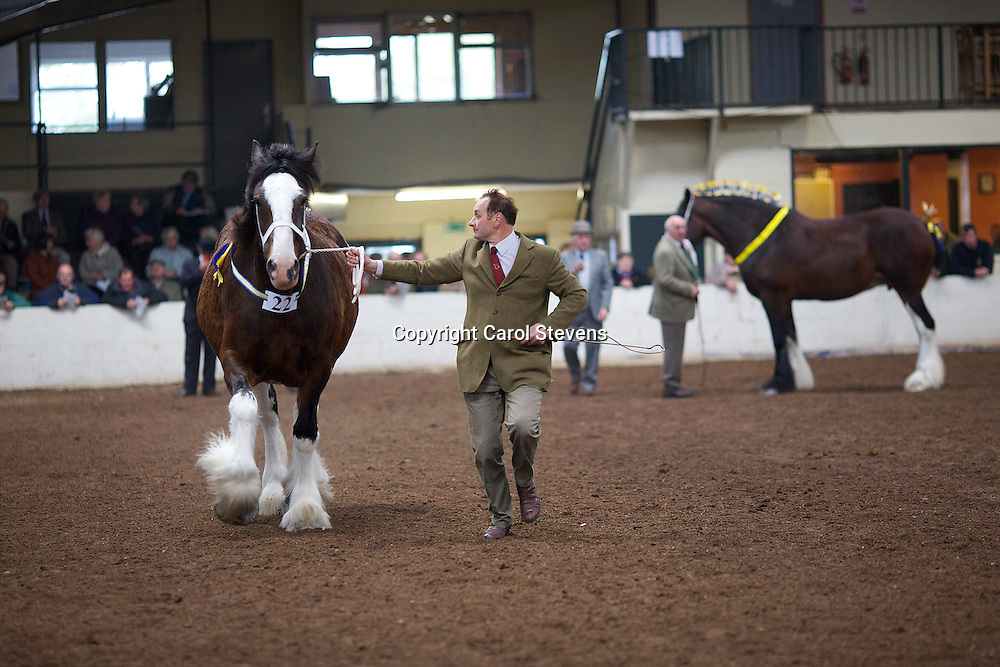 North West and Wales Shire Foal Society <br />