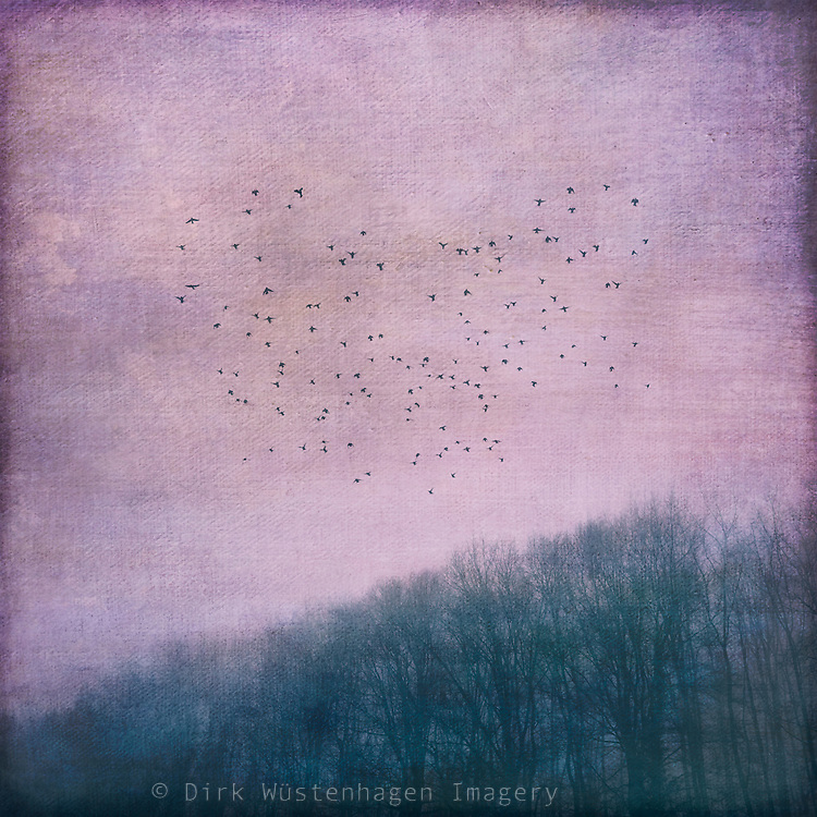 Flock of birds hovering over a forest - textured photograph<br />