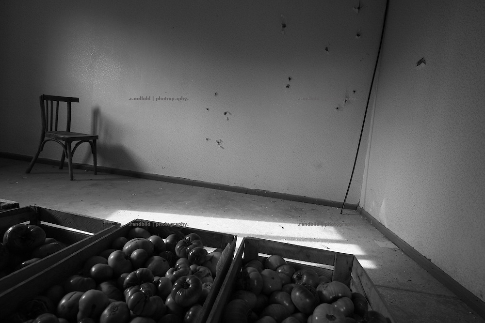 Harvested tomatoes stored in a private house room with bullet impacts in the wall. Seen in Dizi in the so called bufferzone between Gori and Tskhinvali, few days after the withdrawal of the russian forces from the area. The bufferzone was etablished after a short war in August 2008 as the georgian army assulted South Ossetia to overthrow the local separatist government.