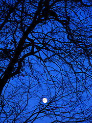 Early evening winter moon.